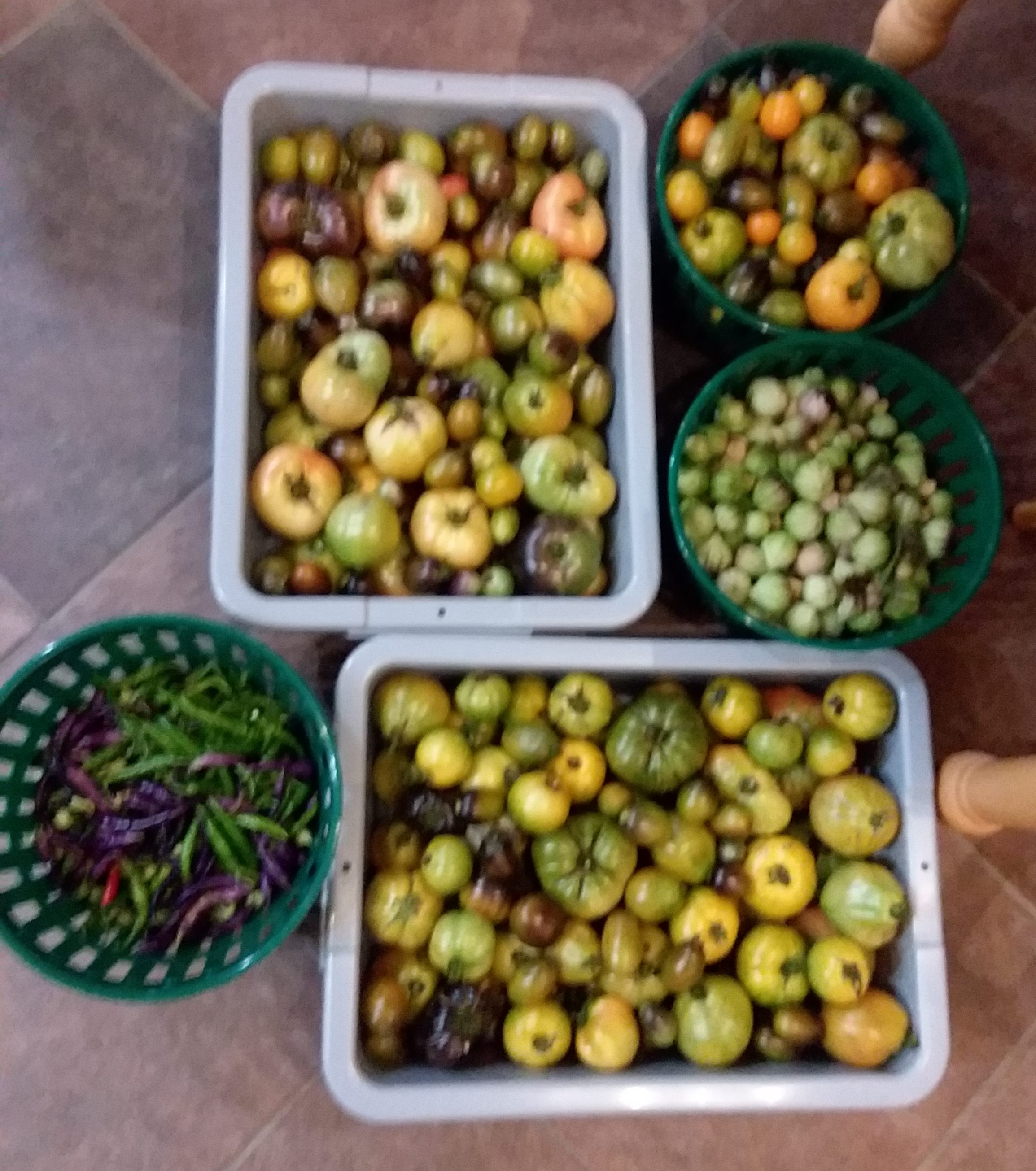 Our second delivery of vegetables to Elkmont Exchange on July 8, 2019.